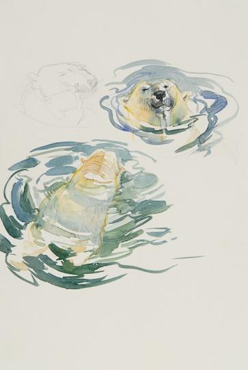 Schwimmender Eisbär (Skizzen), 2010, Aquarell / Farbstifte - Bild von Stefan Bönsch, https://stefanboensch.de