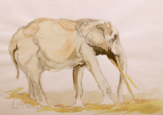 Afrikanischer Elefant, 2011, Aquarell - Bild von Stefan Bönsch, https://stefanboensch.de