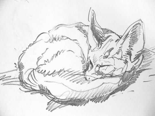 Fennek, 2009, Zeichnung - Bild von Stefan Bönsch, https://stefanboensch.de