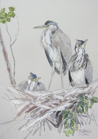 3 junge, bereits ausgewachsene Graureiher im Nest, 2013, Aquarell - Bild von Stefan Bönsch, https://stefanboensch.de