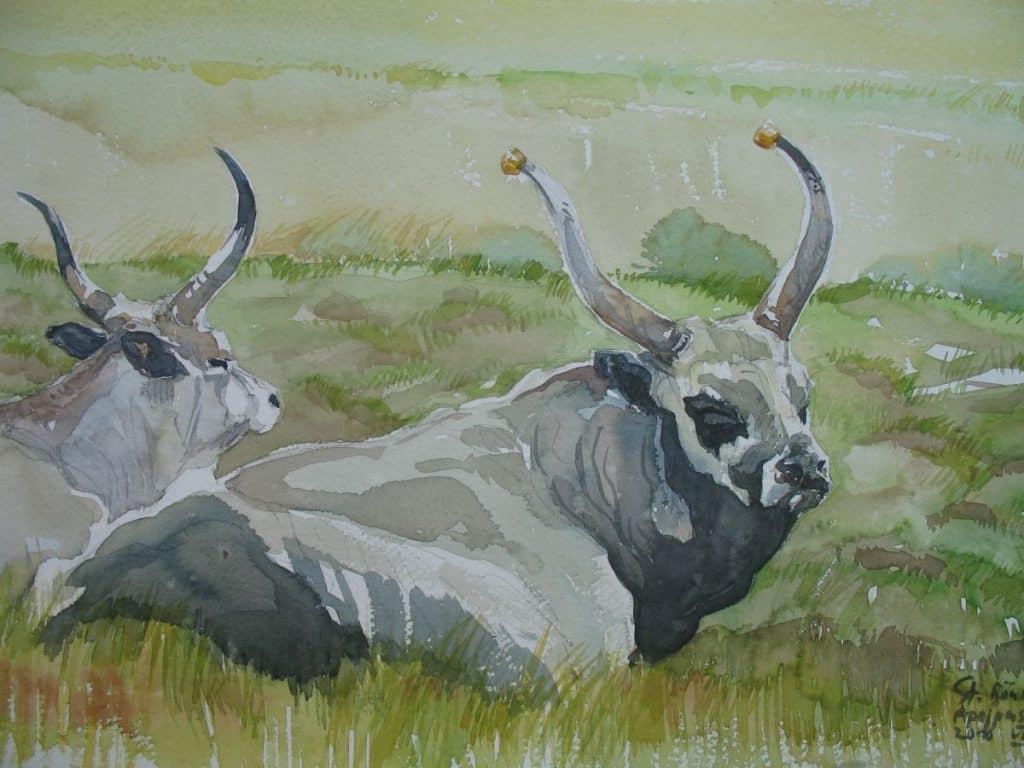 Graurindbulle mit Kuh - Ausstellung Apajpuszta / Ungarn 2010 - https://stefanboensch.de