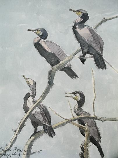 """""""John Busby Seabird Drawing Course"""", Dunbar, Schottland"""