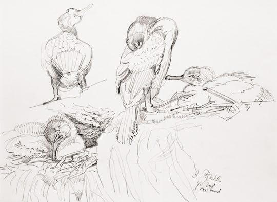 Krähenscharbe mit Jungen, 2008, Bleistiftzeichnung - Bild von Stefan Bönsch, https://stefanboensch.de