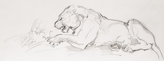 Löwin, 2008, Bleistiftzeichnung - Bild von Stefan Bönsch, https://stefanboensch.de