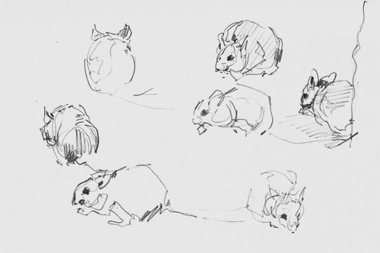 Mäuse im Lemurenhaus, 2013, Zeichnung - Bild von Stefan Bönsch, https://stefanboensch.de