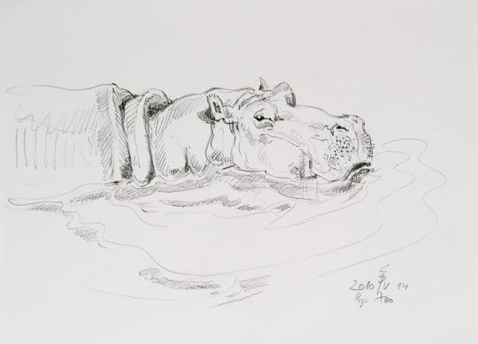 Nilpferd, 2010, Zeichnung - Bild von Stefan Bönsch, https://stefanboensch.de