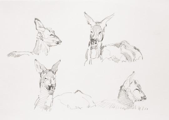 Rehwildstudien, 2008, Bleistiftzeichnung - Bild von Stefan Bönsch, https://stefanboensch.de