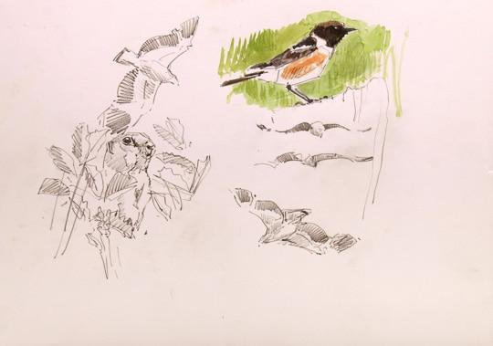 Schwarzkehlchen, Kaiseradler und Ziesel, 2012, Zeichnung / Aquarell - Bild von Stefan Bönsch, https://stefanboensch.de