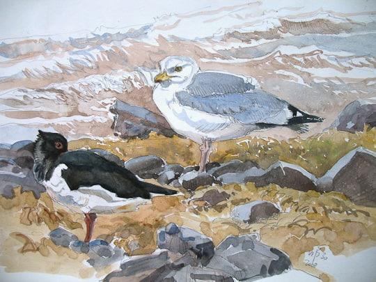 Silbermöwe und Austernfischer, 2008, Aquarell - Bild von Stefan Bönsch, https://stefanboensch.de