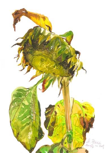 Sonnenblume I, 2009, Aquarell - Bild von Stefan Bönsch, https://stefanboensch.de