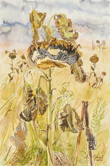 Vergangene Pracht (Sonnenblume), 2010, Aquarell - Bild von Stefan Bönsch, https://stefanboensch.de