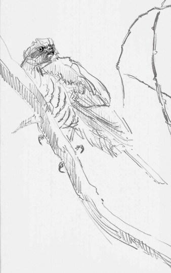 Junges Sperberweibchen, 2013, Zeichnung - Bild von Stefan Bönsch, https://stefanboensch.de