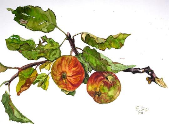 Apfelstilleben, 2009, Aquarell - Bild von Stefan Bönsch, https://stefanboensch.de