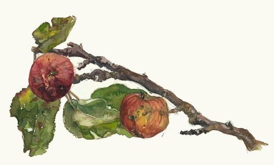 Ast mit Äpfeln, 2008, Gouache / Aquarell - Bild von Stefan Bönsch, https://stefanboensch.de