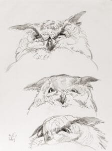 Uhuporträts, 2009, Bleistiftzeichnung - Bild von Stefan Bönsch, https://stefanboensch.de