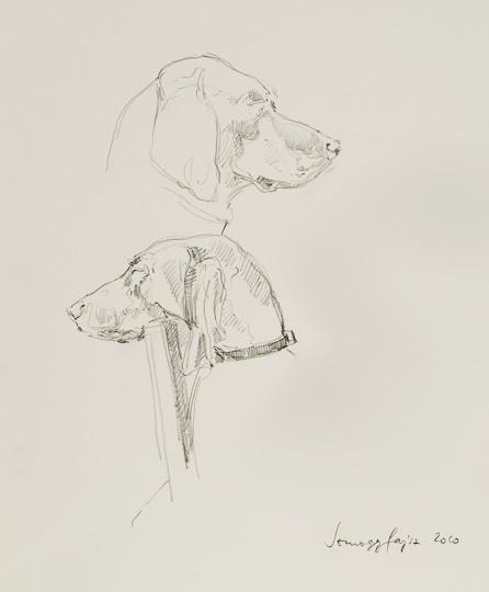 Ungarischer Vorstehhund, 2010, Zeichnung - Bild von Stefan Bönsch, https://stefanboensch.de