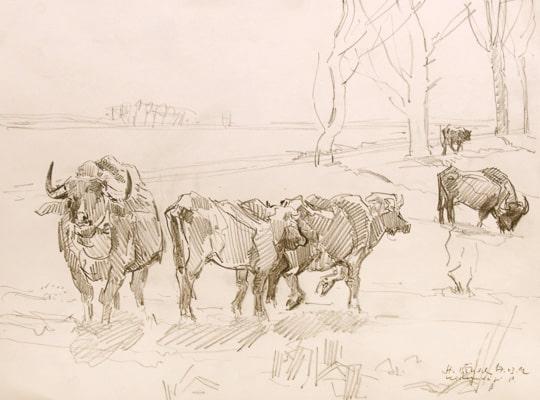 Wasserbüffel, 2012, Zeichnung - Bild von Stefan Bönsch, https://stefanboensch.de