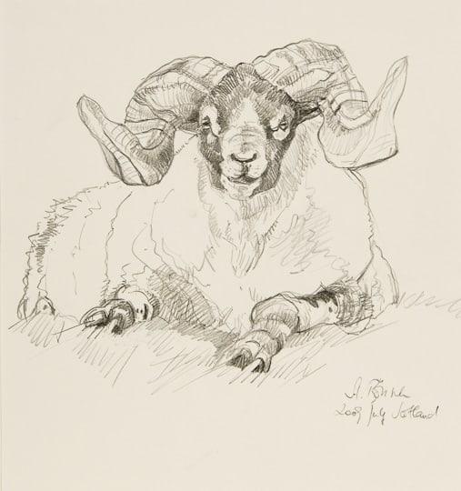 Ruhender Widder, 2009, Zeichnung - Bild von Stefan Bönsch, https://stefanboensch.de