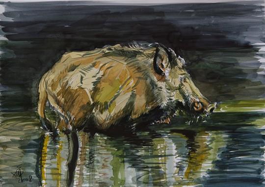 Wildschwein, 2008, Aquarell - Bild von Stefan Bönsch, https://stefanboensch.de