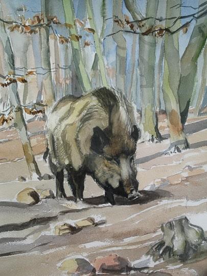 Wildschwein bei Nahrungssuche, 2012, Aquarell - Bild von Stefan Bönsch, https://stefanboensch.de