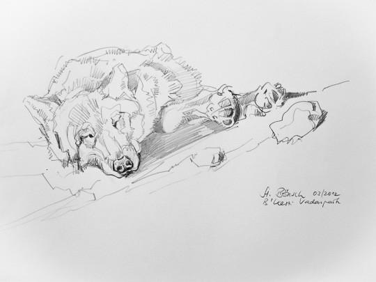 Dösender Wolf, 2012, Zeichnung - Bild von Stefan Bönsch, https://stefanboensch.de