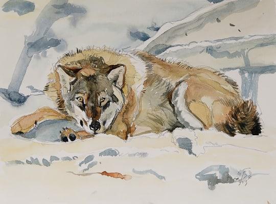 Wolf im Schnee, 2009, Aquarell - Bild von Stefan Bönsch, https://stefanboensch.de