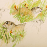 Zieselstudien, 2011, Zeichnung / Aquarell - Bild von Stefan Bönsch, https://stefanboensch.de