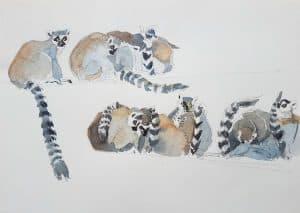 Zoo Budapest, Studie, Lemure 2 - Stefan Bönsch, https://stefanboensch.de
