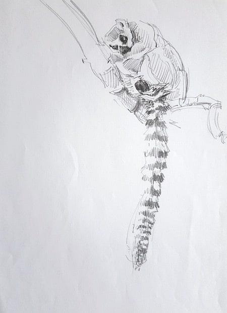 Zoo Budapest, Studie, Lemure 6 - Stefan Bönsch, https://stefanboensch.de