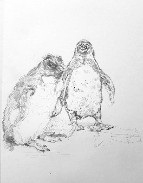Zoologisches Forschungsmuseum Alexander König, Studie, Pinguine 2 - Stefan Bönsch, https://stefanboensch.de